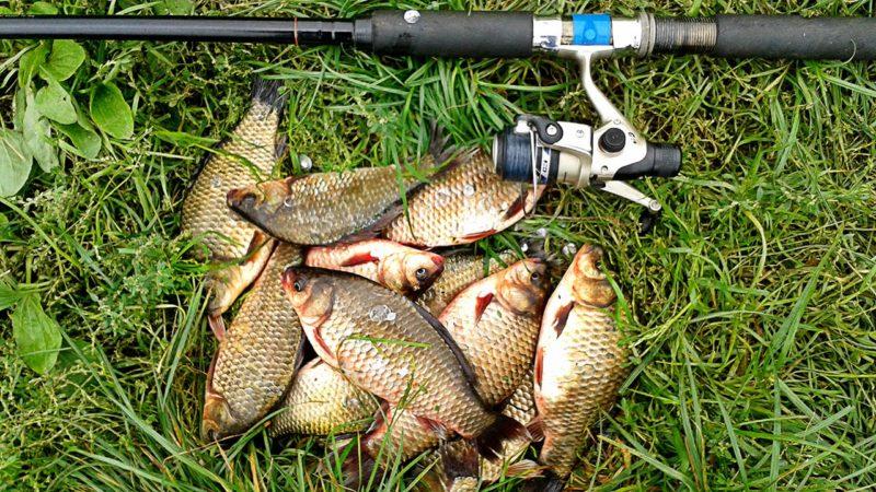ловля белой рыбы летом