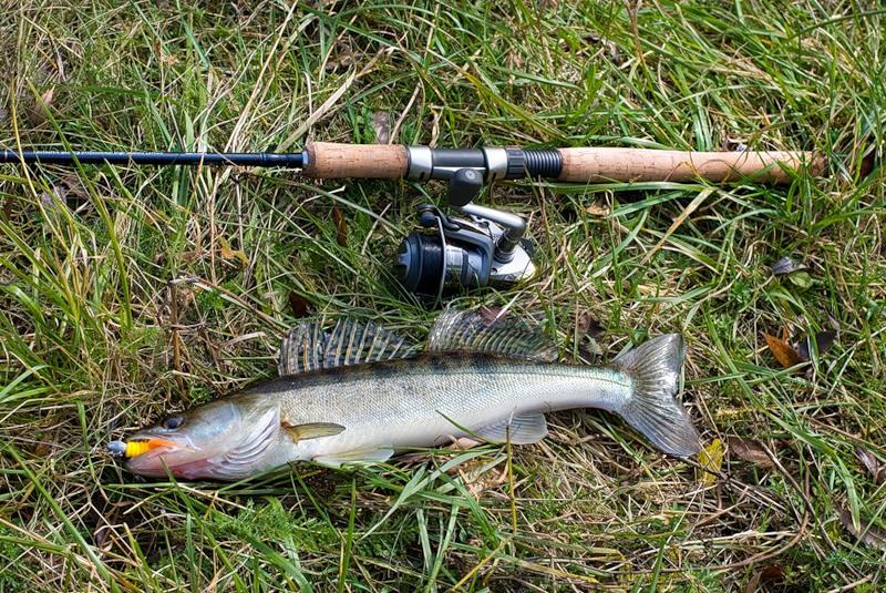 в какое время года лучше всего ловить судака