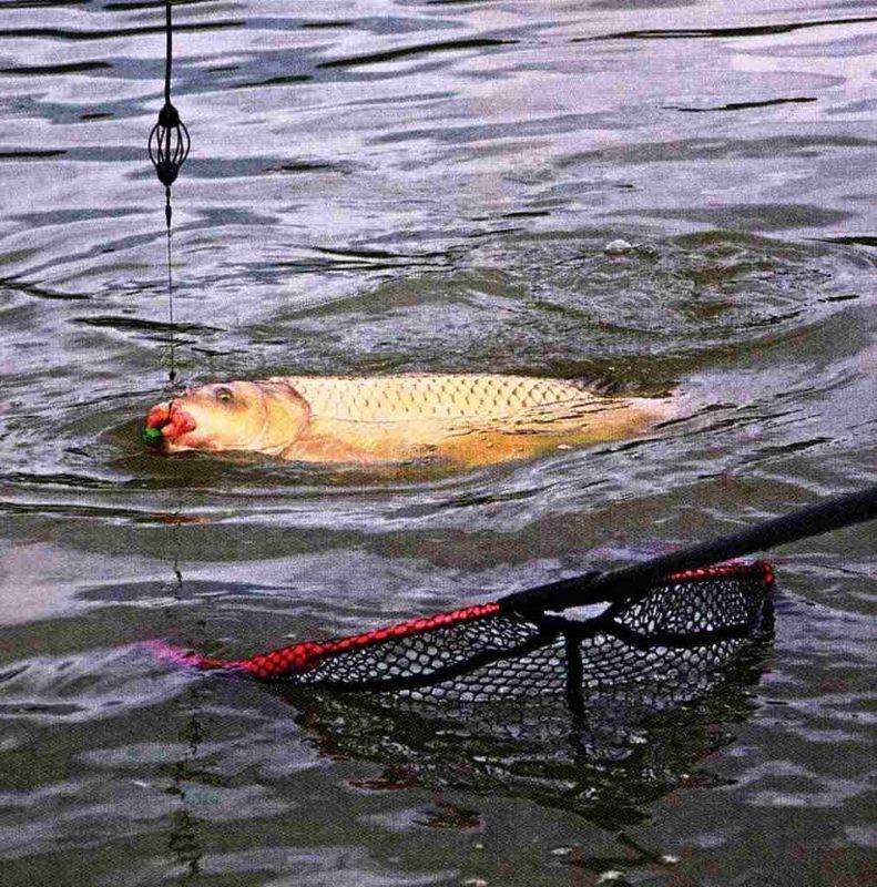 видео летняя рыбалка на карпа