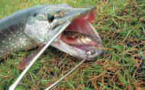 Рыбалка на сазана на донку с берега