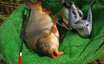 Рыбалка на сазана в августе