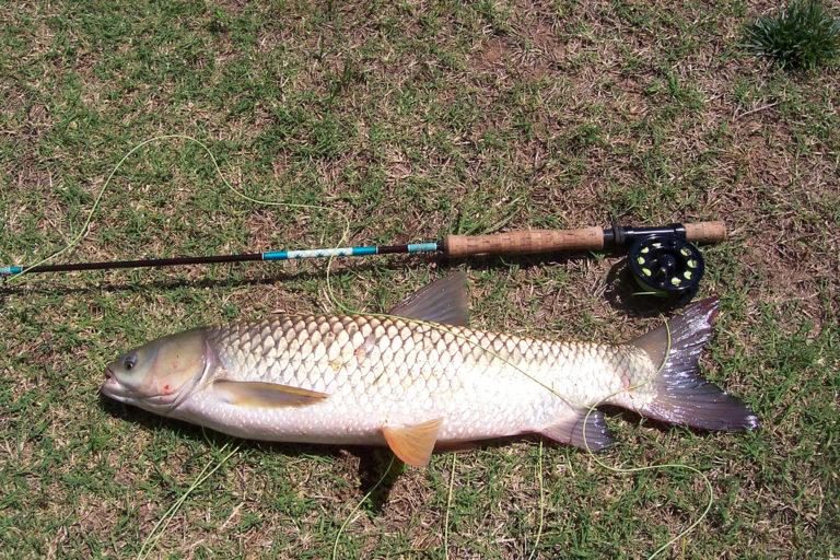 рыбалка как ловить амура озеро