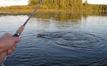 Рыбалка в Пирогово платно