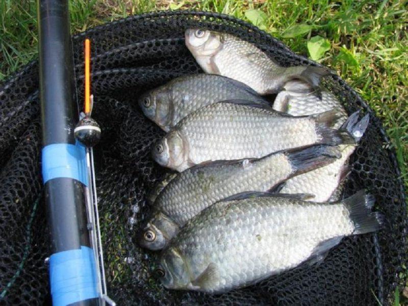 ловить рыбу в августа