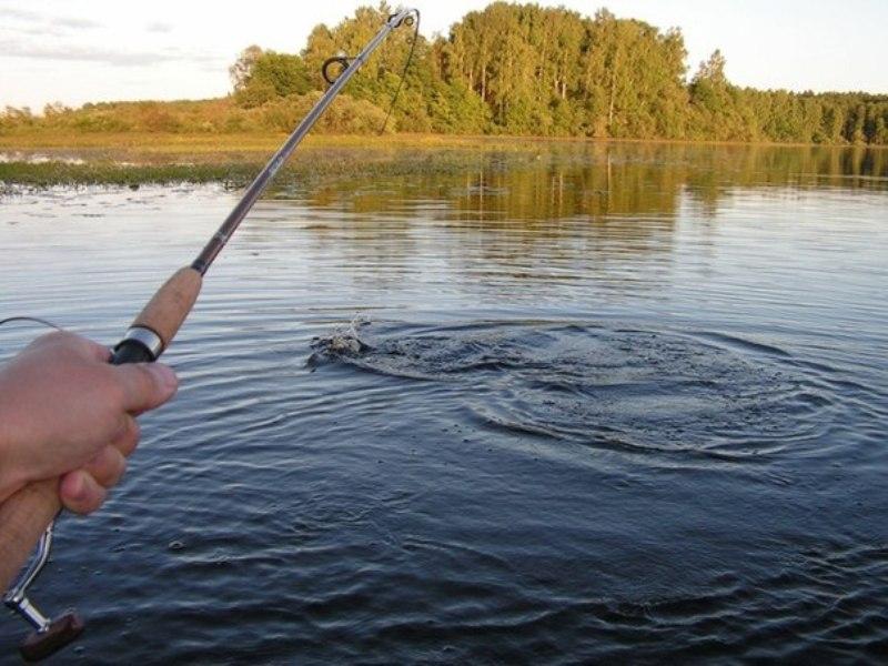 Рыбалка в ленобласти куда поехать