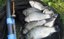 Рыбалка на карпа в августе на поплавочную удочку