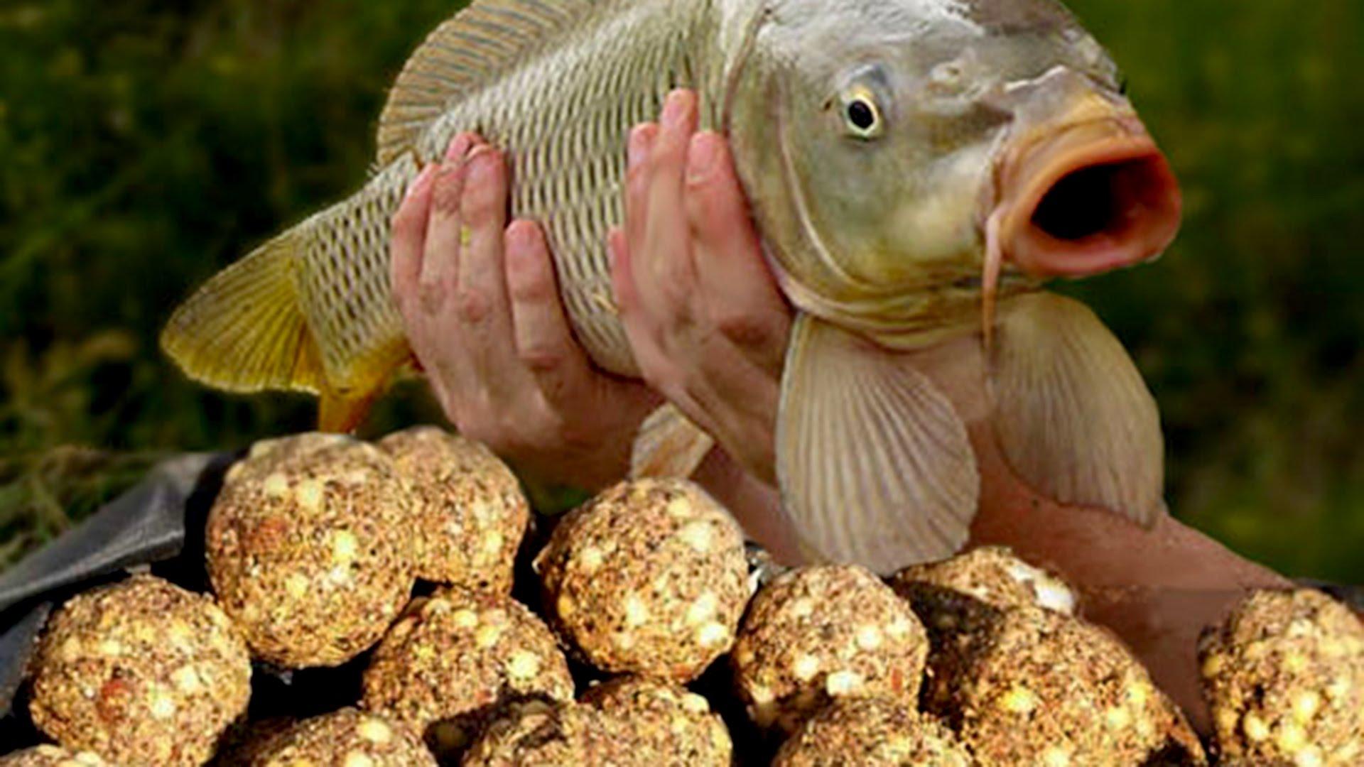 Привада рыбы своими руками